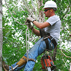Arborist - Landscaping Employment Opportunities