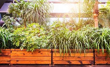 Green-plants-in-modern-building-000076991923_Large-mobile.jpg