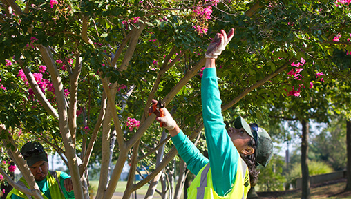 Arborist Career Description – Landscape Industry Careers