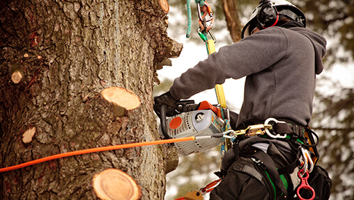 Information on Certified and Noncertified Arborist Salaries