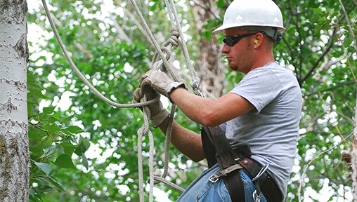 Arborist Job Opportunities – Landscape Industry Careers